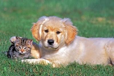 Hayvan Kazalarında Tedaviyi Sigorta Karşılar Mı?
